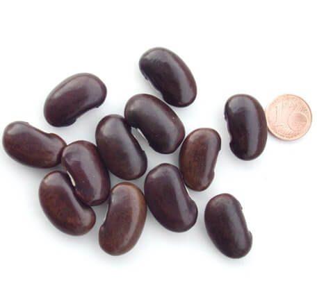 Stangenbohne Inca Pea Bean