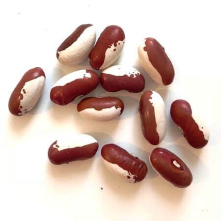 Bohnen-Saatgut